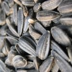 Black Oil Sunflower Seed Sale