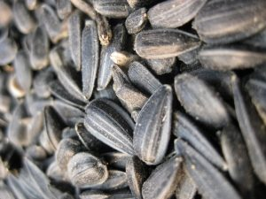Black Oil Sunflower Seed Sale
